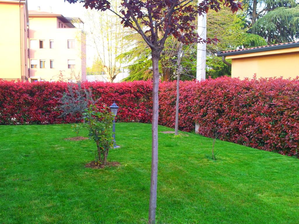Giardini per tutti i gusti monari giardini for Piante sempreverdi per giardino