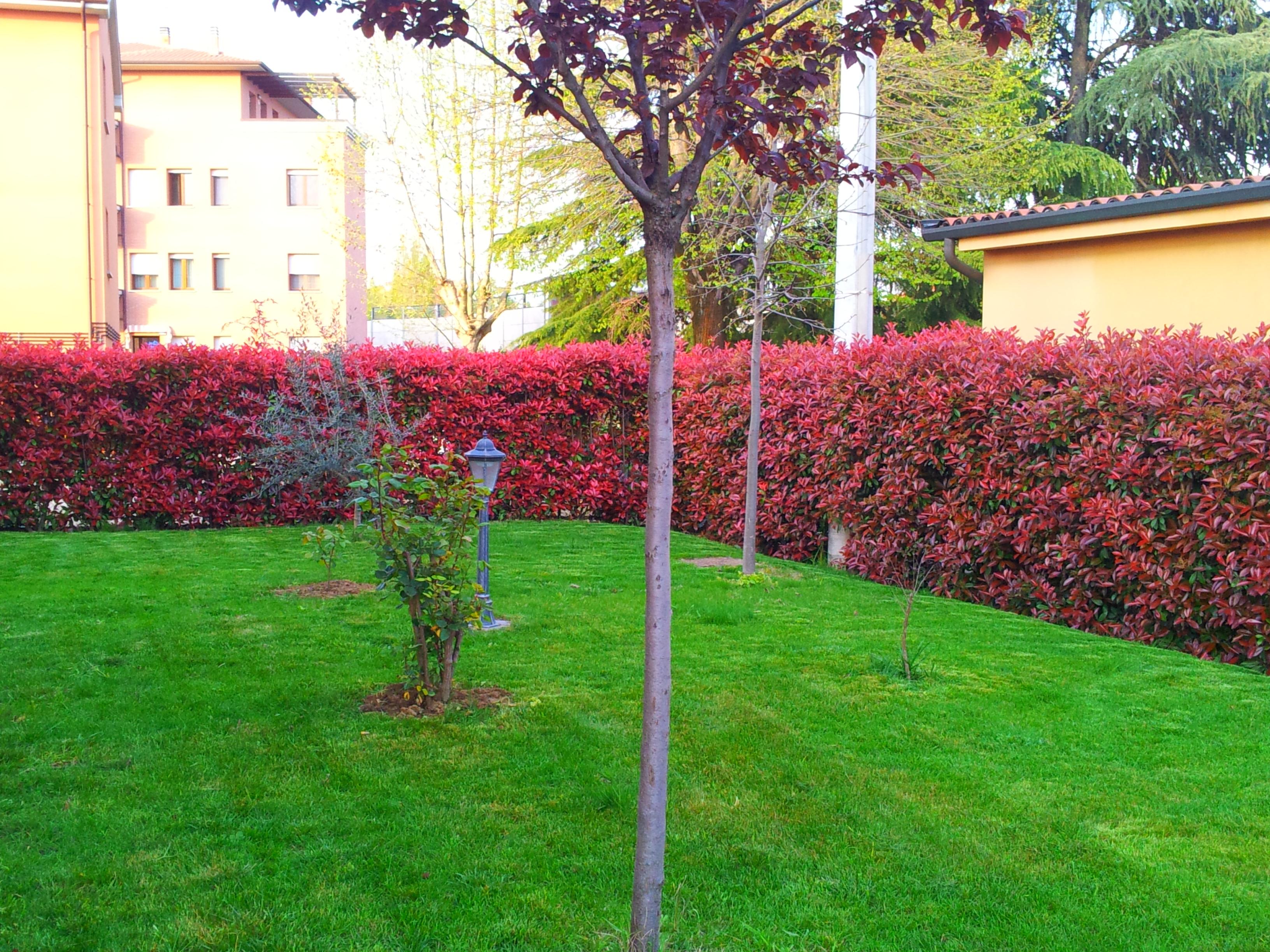 Giardini per tutti i gusti monari giardini for Siepe in vaso